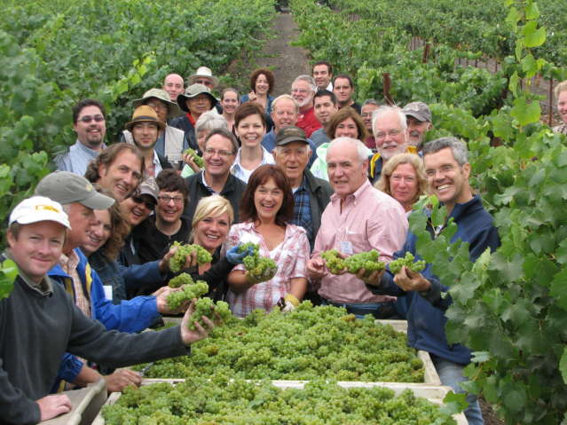 Campers at Ccamp SChramsberg's Spring Blending Session harvest grapes