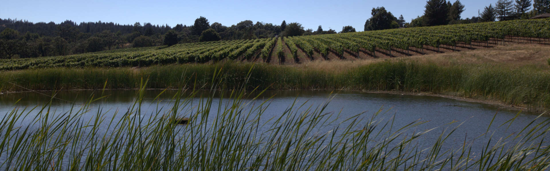 View of Keefer Ranch Vineyard and pond in Green Valley, California