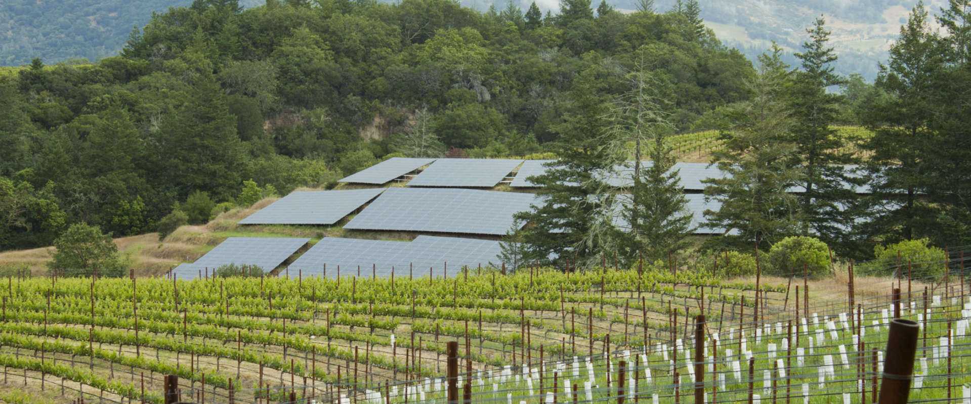 Schramsberg solar panels near McEachran Vineyard with misty mountains the the background