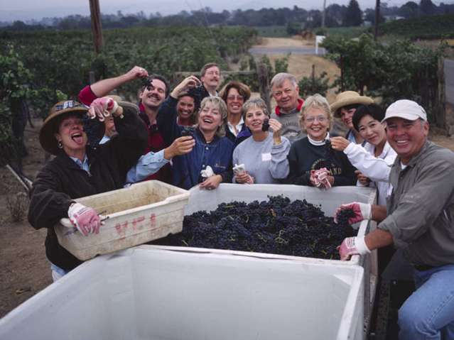 Camp Schramsberg participants surround a bin of harvested grapes